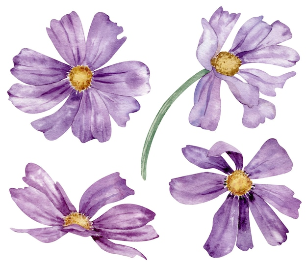 Conjunto em aquarela de flores roxas de verão