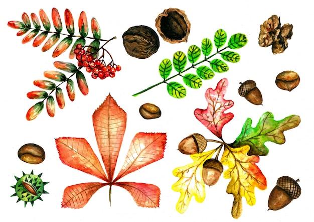 Conjunto em aquarela de folhas de outono