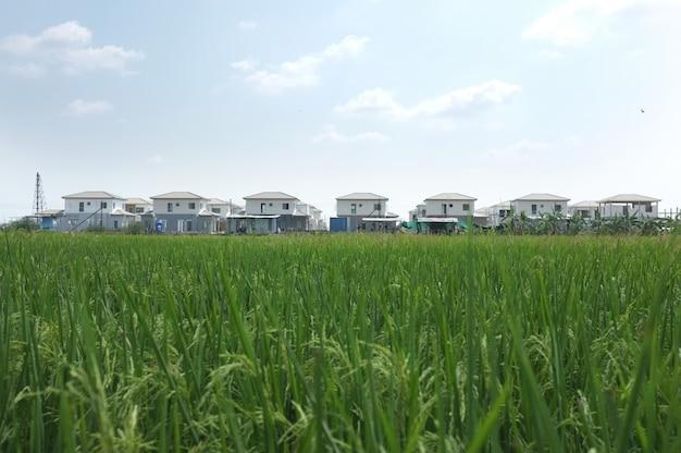 Conjunto habitacional com campo de arroz