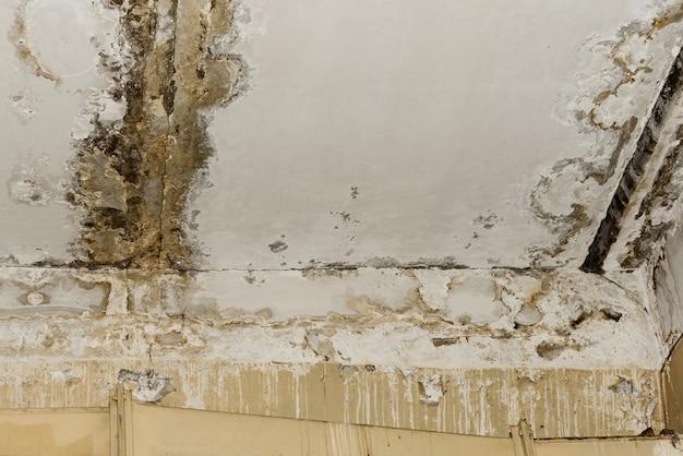Consequências de vazamento no telhado da antiga sala de escritório