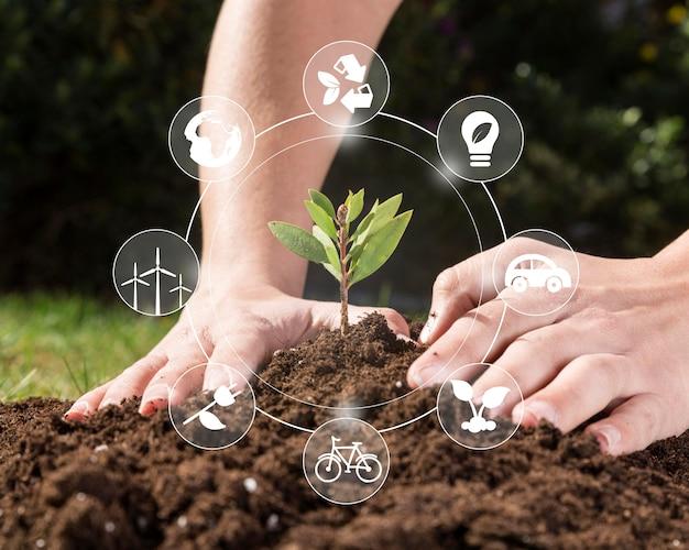 Conservação de plantas naturais
