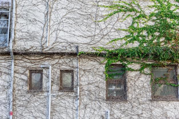 Construção de casa de cobertura de planta rastejante