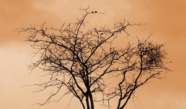 Contorno de galhos e pássaros em um fundo marrom.