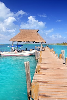 Contoy, ilha, méxico, madeira, cais, reserva natureza