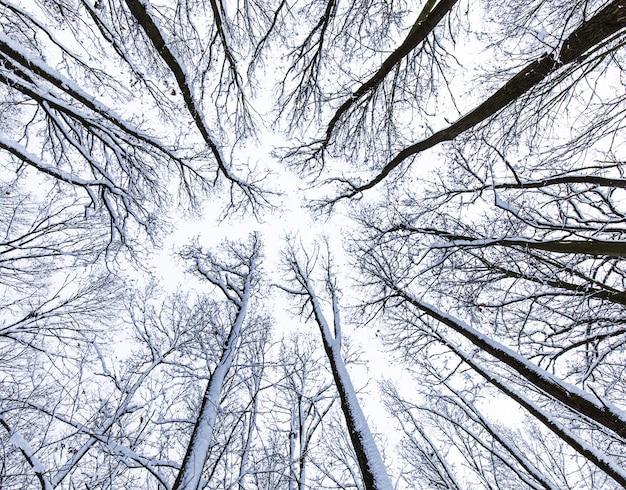 Copa das árvores visto de baixo