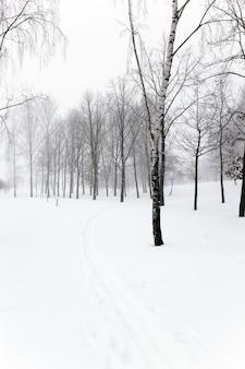 Copas das árvores fotografadas em close das copas das árvores no inverno