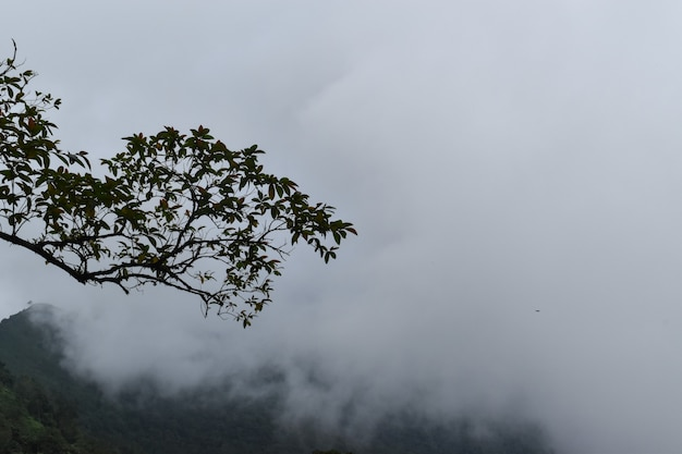 Copas das árvores nevoentas na floresta profunda. opinião da árvore, do ramo, da folha, a nevoenta e enevoada com fundo do borrão.