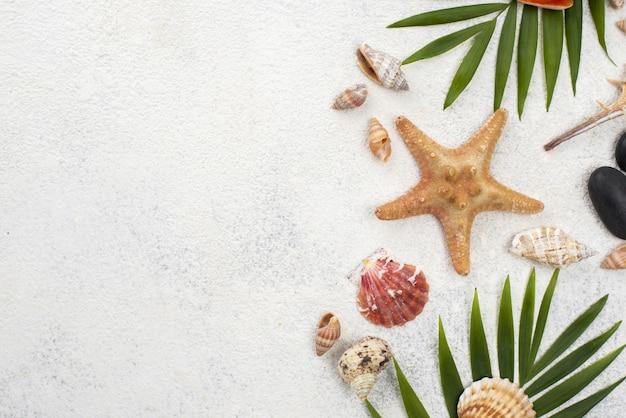 Cópia-espaço conchas com folhas ao lado