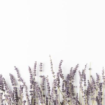 Copiar ramos de lvender espaciais