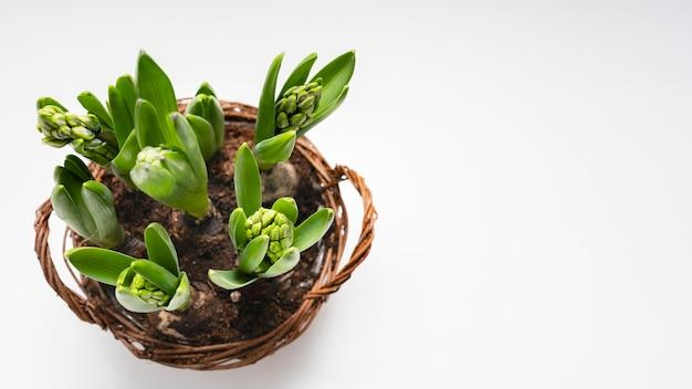 Copie a cesta do espaço com o bulbo das plantas