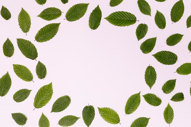 Copie espaço arranjo de círculo de folhas