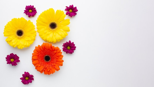 Copie flores coloridas do espaço