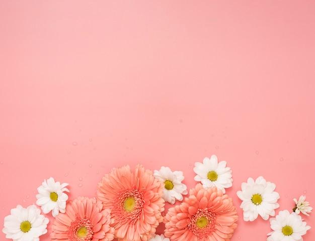 Copie o espaço com margaridas e flores gerbera
