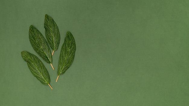 Copie o espaço folhas de fundo verde