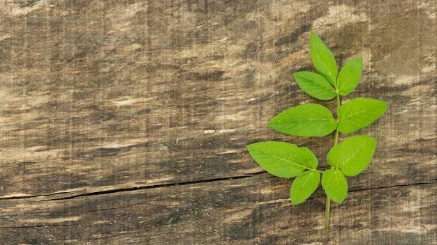 Copie o espaço fundo de madeira com folhas