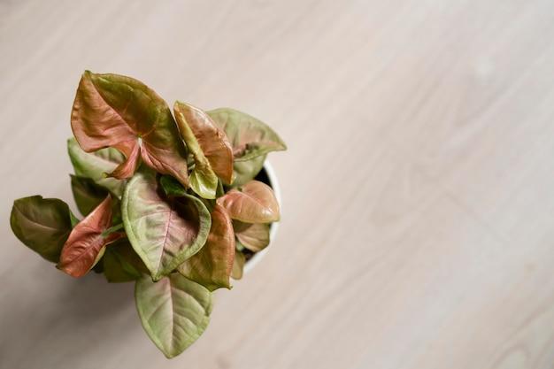 Copie o vaso de flores do espaço na mesa