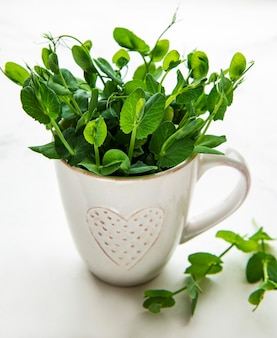 Copo com brotos verdes de sementes germinadas de ervilhas em uma mesa