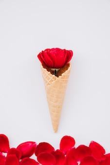 Copo de bolacha com flor vermelha perto de pétalas vínicas