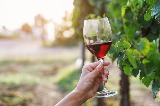 Copo de vinho tinto na mão na videira