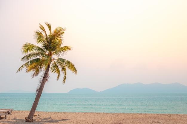 Coqueiro à beira-mar em uma praia deserta