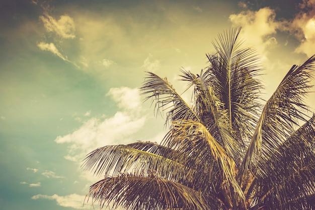 Coqueiro e céu no verão com vintage tonificado.