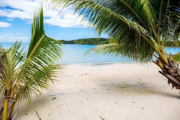 Coqueiro na praia com bonito.