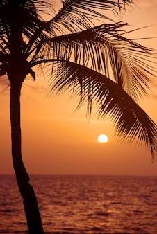 Coqueiro no litoral tropical, feito com tons vintage, tons quentes.