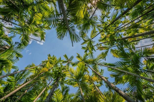 Coqueiros com céu azul