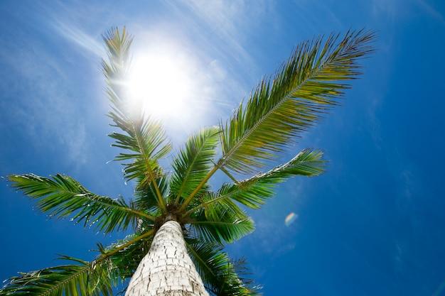 Coqueiros, contra, céu azul, coqueiros, em, costa tropical