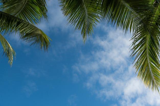 Coqueiros de palma contra o céu azul para o fundo