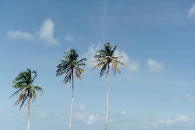 Coqueiros de palmeiras tropicais no clarão do céu ao pôr do sol e fundo de natureza bokeh