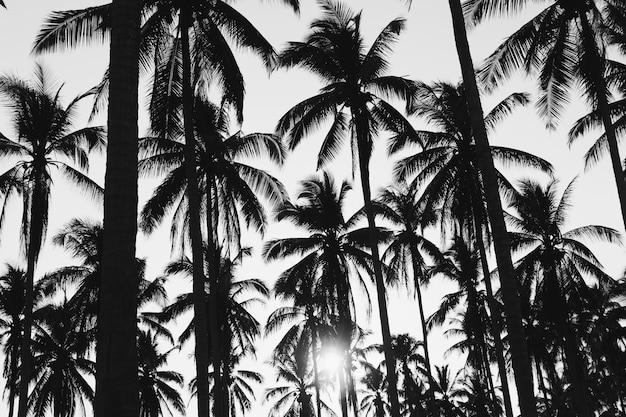 Coqueiros de palmeiras tropicais no clarão do céu ao pôr do sol e tom preto e branco da natureza do bokeh