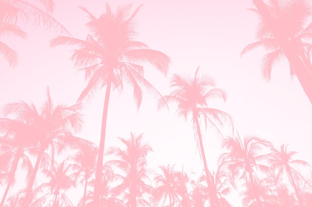Coqueiros de palmeiras tropicais no reflexo do céu do sol e bokeh natureza colorida cópia espaço fundo de conceito de verão