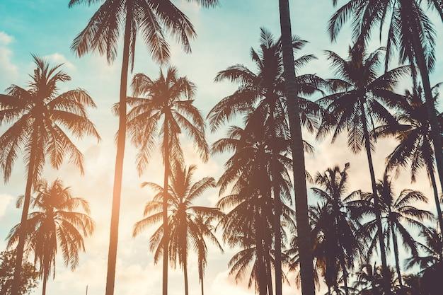Coqueiros de palmeiras tropicais no reflexo do céu do sol e fundo de natureza bokeh.