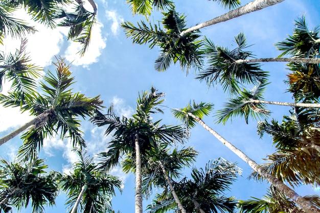 Coqueiros e lindo céu tropical verão fundo