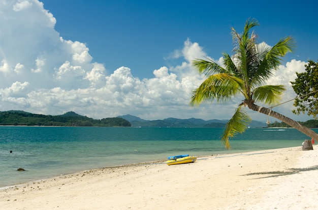 Coqueiros e praia