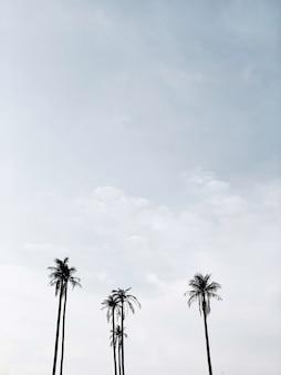 Coqueiros exóticos tropicais solitários contra o céu azul. neutro mínimo. conceito de verão e viagens em phuket