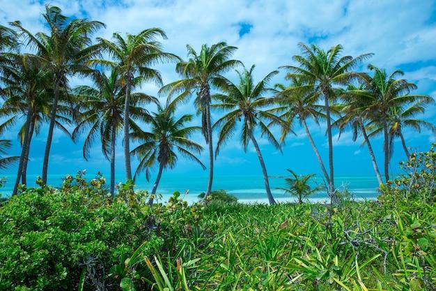 Coqueiros, lindo fundo tropical