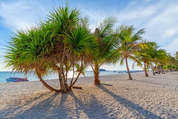 Coqueiros na praia de areia branca e céu azul no sul da tailândia