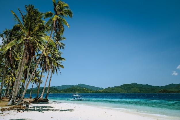 Coqueiros na praia de areia. palawan, filipinas