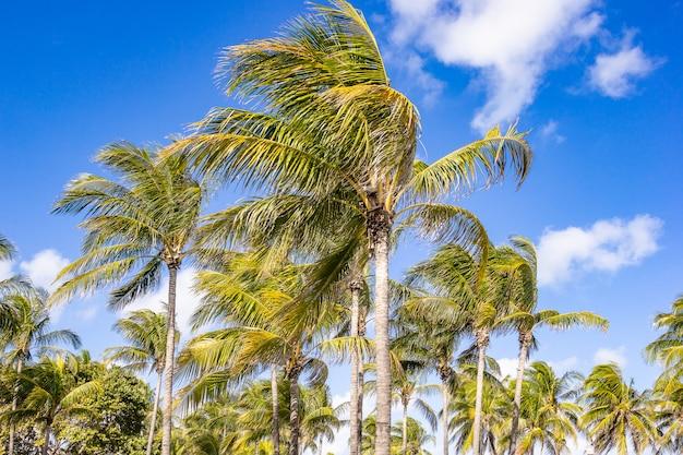 Coqueiros, palmeiras na costa tropical na praia com o fundo do céu.