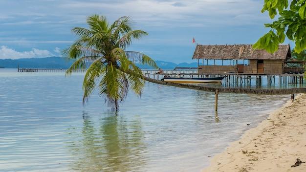 Coqueiros perto da estação de mergulho na ilha de kri, raja ampat, indonésia, papua ocidental.