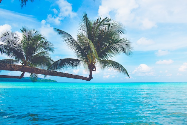 Coqueiros saindo para o mar em um dia de céu claro, koh kood, tailândia