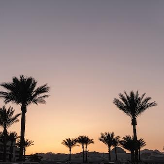 Coqueiros tropicais de verão contra o céu do pôr do sol Foto Premium