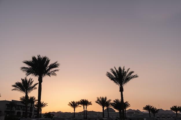 Coqueiros tropicais de verão contra o céu do pôr do sol