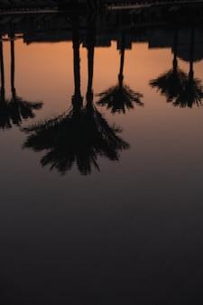 Coqueiros tropicais de verão e reflexo da silhueta do céu do sol na água