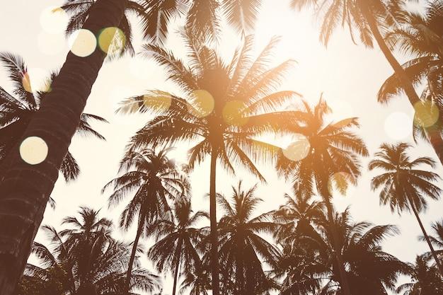 Coqueiros tropicais no céu pôr do sol.