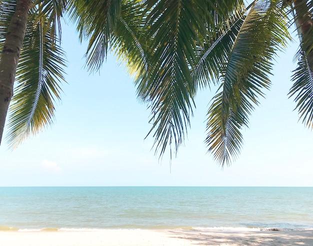 Coqueiros verdes na grama em uma praia ensolarada