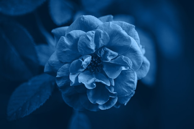 Cor azul clássica do ano 2020. fundo de natureza