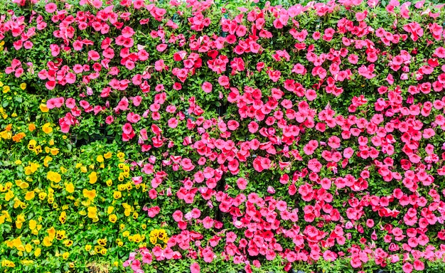 Cor cidade gramado verão trajeto folha